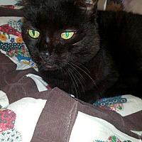 Adopt A Pet :: Velvet - Crossville, TN