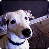 Adopt A Pet :: Harley - Rancho Cordova, CA