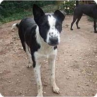 Adopt A Pet :: Jake - Chimayo, NM