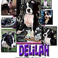 Adopt A Pet :: Delilah - Colleyville, TX