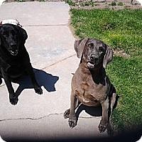 Adopt A Pet :: Bourigard (& Maxine) - Alliance, NE