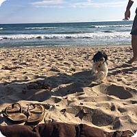 Adopt A Pet :: Baby - Whittier, CA