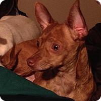 Adopt A Pet :: Myles - Topeka, KS
