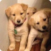 Adopt A Pet :: Ella (Mozzarella) - Regina, SK