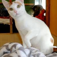 Adopt A Pet :: Dot - Westville, IN