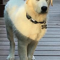 Adopt A Pet :: Zues - Newnan, GA