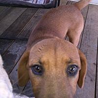 Adopt A Pet :: Ryder - Crestview, FL