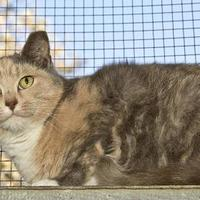 Adopt A Pet :: Millie - Cashiers, NC