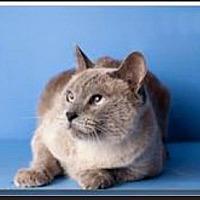 Adopt A Pet :: Jetblue - Gilbert, AZ
