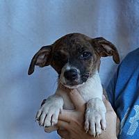 Adopt A Pet :: Zander - Oviedo, FL