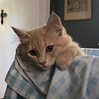 Adopt A Pet :: Irma - Covington, KY