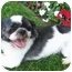 Photo 3 - Lhasa Apso Mix Dog for adoption in Los Angeles, California - FUJI
