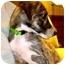 Photo 2 - Italian Greyhound Mix Puppy for adoption in Manalapan, New Jersey - Savannah