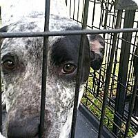 Terrier (Unknown Type, Medium)/Labrador Retriever Mix Puppy for adoption in Blanchard, Oklahoma - Jade