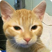 Adopt A Pet :: Sushi - Staley, NC