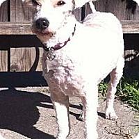 Adopt A Pet :: Princess - Goleta, CA