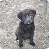 Adopt A Pet :: Fran - New Boston, NH