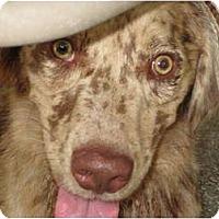 Adopt A Pet :: Chip - Nokomis, FL