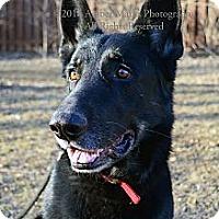 Adopt A Pet :: Zeus/Sheba - Indianapolis, IN