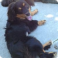Adopt A Pet :: CHARLIE - W. Warwick, RI