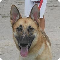 Adopt A Pet :: Parie' - Lockhart, TX