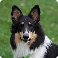 Adopt A Pet :: Mischief - Powell, OH