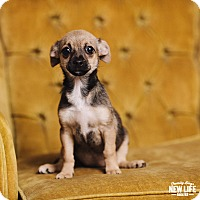 Adopt A Pet :: Tiny - Portland, OR