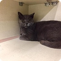 Adopt A Pet :: Marshall (At Pet Valu) - Baltimore, MD
