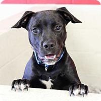 Adopt A Pet :: Noah - Atlanta, GA