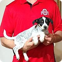 Adopt A Pet :: Jazzy - South Euclid, OH