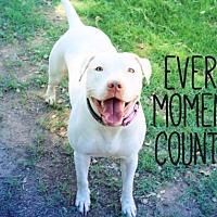 Adopt A Pet :: ROSEY - Wiggle Butt! - Chandler, AZ