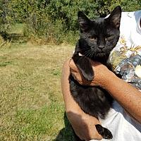 Adopt A Pet :: Soot - Cardwell, MT