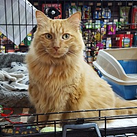 Adopt A Pet :: Tully - Toronto, ON