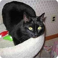 Adopt A Pet :: Misty - Quincy, MA
