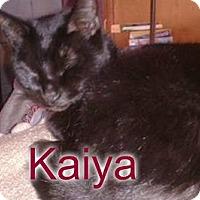 Adopt A Pet :: Kaiya - Rochester, NY