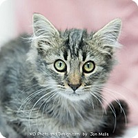 Adopt A Pet :: Thumper - Fountain Hills, AZ