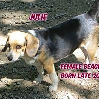 Adopt A Pet :: Julie - Huddleston, VA