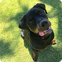 Adopt A Pet :: Coffee - Gilbert, AZ
