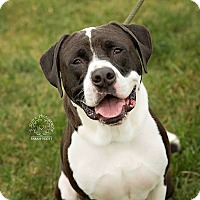 Adopt A Pet :: Gus - ADOPTED! - Zanesville, OH