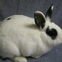 Adopt A Pet :: Clarice - Harrisburg, PA