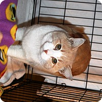 Adopt A Pet :: Garfield - Nolensville, TN