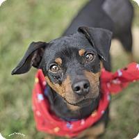 Adopt A Pet :: Sharky - Kingwood, TX