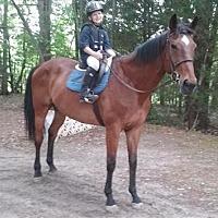 Adopt A Pet :: LL Cool Horse - Newfield, NJ