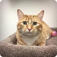 Adopt A Pet :: Archie - Roseville, MN