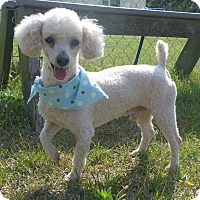 Adopt A Pet :: Pepsi - Manning, SC