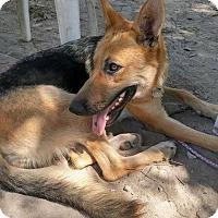 Adopt A Pet :: Princess - Summerville, SC