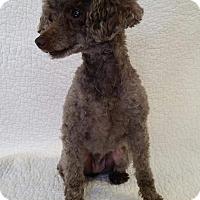 Adopt A Pet :: Janice Star - Urbana, OH