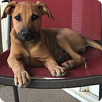 Adopt A Pet :: Cabernet - Studio City, CA