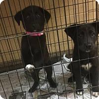 Adopt A Pet :: Harbor - Denver, CO