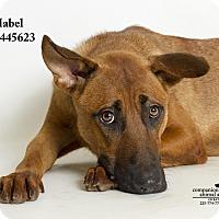Adopt A Pet :: Mabel - Baton Rouge, LA